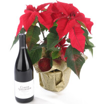 Poinsettia Plant and Red Wine